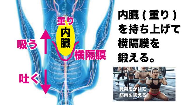 横隔膜の動き-逆さ